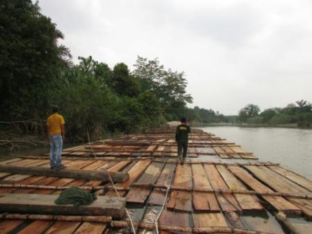 Viele Unternehmen machen falsche Angaben zur Herkunft von Holz